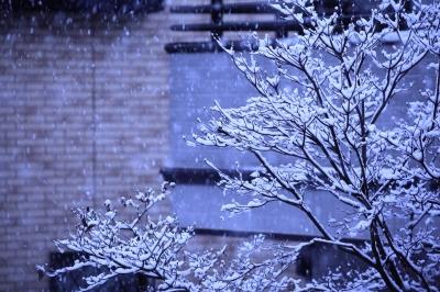 soku_23786.jpg :: 風景 街並み 郊外の風景 雪景色