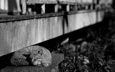 soku_23830.jpg :: 動物 哺乳類 猫 ネコ モノクロ