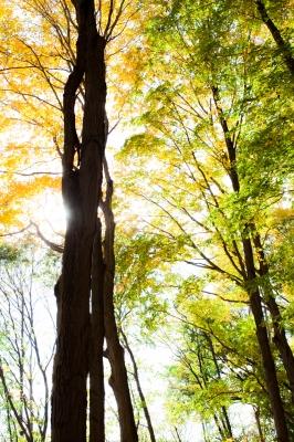 soku_23850.jpg :: 風景 自然 樹木 逆光