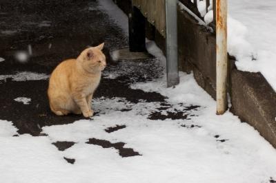 soku_23951.jpg :: 動物 哺乳類 猫 ネコ 猫はこたつで丸くなる
