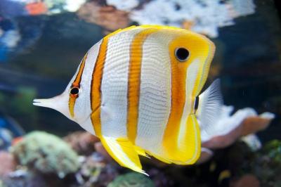 soku_24020.jpg :: 動物 魚類 熱帯魚