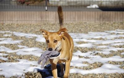 soku_24107.jpg :: 犬 散歩 届け物 手袋