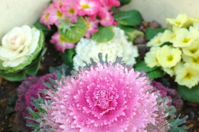 soku_24155.jpg :: 植物 花 ピンクの花