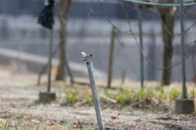 soku_24166.jpg :: 動物 鳥 野鳥 自然の鳥 未記入鳥