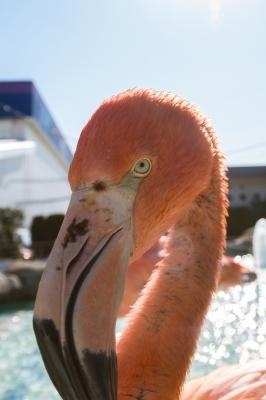soku_24319.jpg :: 動物 鳥 フラミンゴ