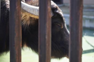 soku_24485.jpg :: AF.S NIKKOR 24.120mm f/4G ED VR 動物園 愛媛県立とべ動物園