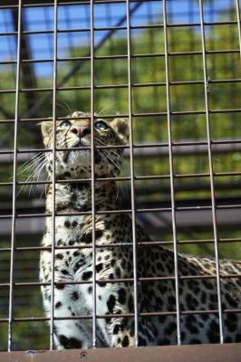 soku_24494.jpg :: AF.S NIKKOR 24.120mm f/4G ED VR 動物園 愛媛県立とべ動物園