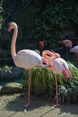soku_24497.jpg :: AF.S NIKKOR 24.120mm f/4G ED VR 動物園 愛媛県立とべ動物園