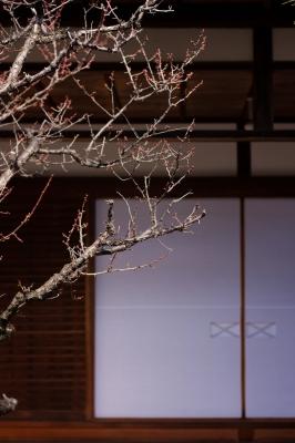 soku_24563.jpg :: 寺院 梅