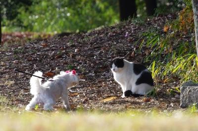 soku_24636.jpg :: 動物 ペット 犬 哺乳類 猫 ネコ