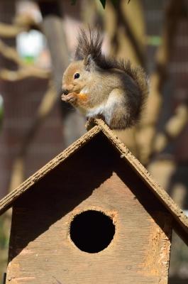 soku_24772.jpg :: 動物 哺乳類 井の頭自然文化園 ニホンリス?