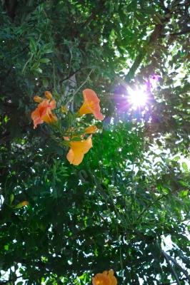 soku_24807.jpg :: 植物 花 オレンジ色の花