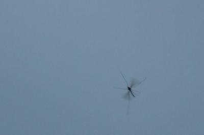 soku_24862.jpg :: 動物 虫 昆虫