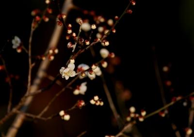 soku_24879.jpg :: 梅