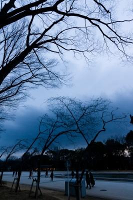 soku_24881.jpg :: 上野公園 サクラ 桜