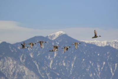 soku_25122.jpg :: 動物 鳥 野鳥 自然の鳥 未記入鳥