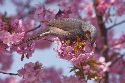 soku_25145.jpg :: 動物 鳥 野鳥 自然の鳥 未記入鳥