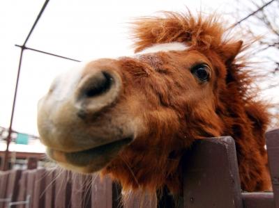 soku_25178.jpg :: 動物 哺乳類 馬 ウマ