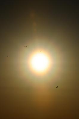 soku_25246.jpg :: 太陽 光冠 花粉光冠 ヘリコプター 鳥 シルエット
