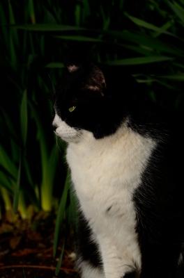 soku_25418.jpg :: 動物 哺乳類 猫 ネコ