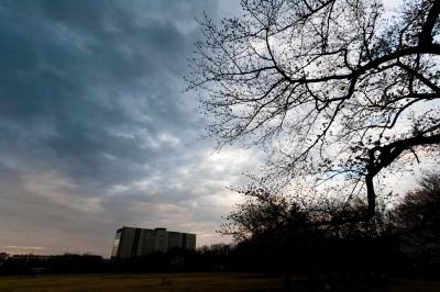 soku_25508.jpg :: 桜 蕾 空 雲