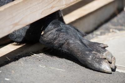 soku_25575.jpg :: 動物 哺乳類 蹄