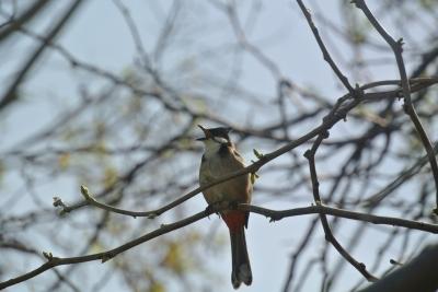soku_25589.jpg :: 動物 鳥 野鳥 自然の鳥 未記入鳥