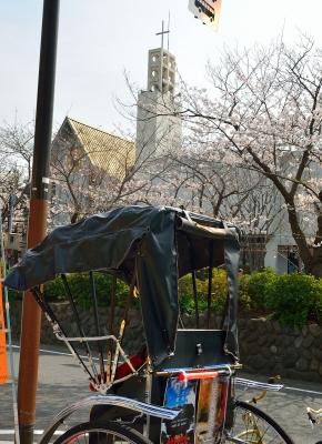 soku_25630.jpg :: 植物 花 桜 サクラ 人力車 教会 鎌倉