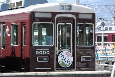 soku_25730.jpg :: 乗り物 交通 鉄道 電車 さくら
