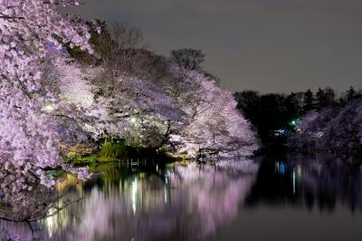 soku_25738.jpg :: 植物 花 桜 サクラ 井の頭公園 夜景 夜桜