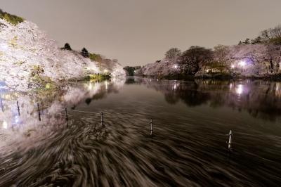soku_25787.jpg :: 植物 花 桜 サクラ 夜桜 井の頭公園 散華