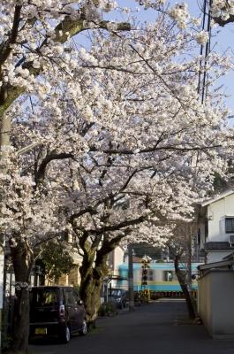 soku_25813.jpg :: 風景 街並み 桜