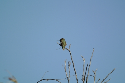 soku_25819.jpg :: Nikon V1 FT1 300mm 鳥