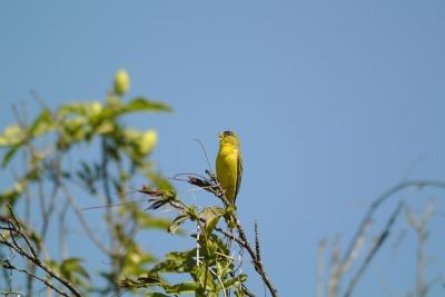 soku_25820.jpg :: Nikon V1 FT1 300mm 鳥