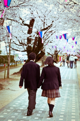 soku_25871.jpg :: 桜 カップル 男女 人物