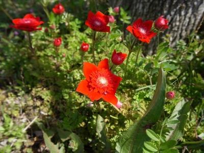 soku_25957.jpg :: 植物 花 赤い花