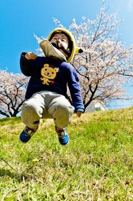 soku_25961.jpg :: 植物 花 桜 サクラ 菜の花 人物 子供 少年 男の子
