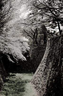 soku_25973.jpg :: 植物 花 桜 サクラ 建築 建造物 城 名古屋城