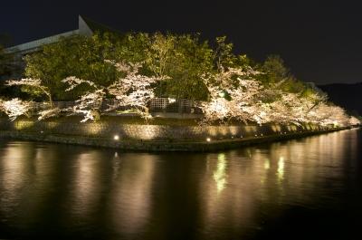 soku_25984.jpg :: 植物 花 桜 サクラ 夜桜 満開 平安神宮