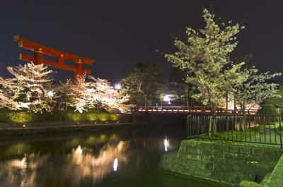soku_25985.jpg :: 植物 花 桜 サクラ 夜桜 満開 平安神宮
