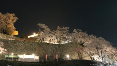 soku_25997.jpg :: 建築 建造物 城 津山城 鶴山公園 植物 花 桜 サクラ 夜桜 満開