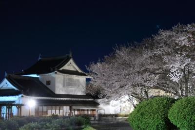 soku_25999.jpg :: 建築 建造物 城 津山城 鶴山公園 植物 花 桜 サクラ 夜桜 満開 備中櫓