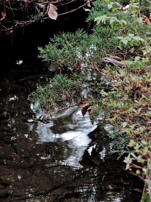 soku_26008.jpg :: PowerShotG15 風景 自然 水分 公園 池 蛇 コンデジ埼玉 lock