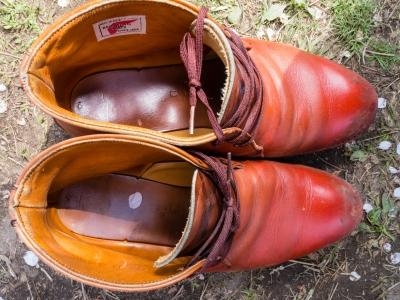 soku_26016.jpg :: 植物 花 桜 サクラ 花びら 靴