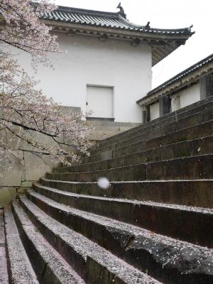 soku_26037.jpg :: 大坂城多聞櫓 桜 ソメイヨシノ 散り染め