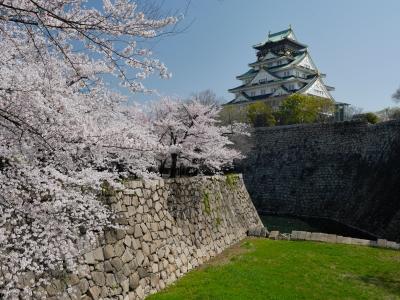 soku_26038.jpg :: 大坂城西の丸庭園 桜 ソメイヨシノ 満開