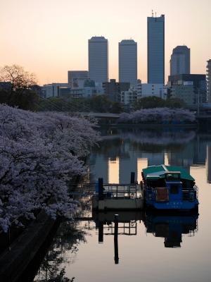 soku_26040.jpg :: 天満橋 大川 桜 ソメイヨシノ
