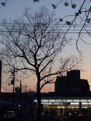 soku_26167.jpg :: 風景 自然 夜景