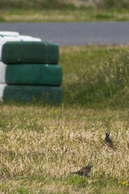 soku_26197.jpg :: 乗り物 交通 自動車 サーキット レース 動物 鳥 野鳥 自然の鳥 未記入鳥