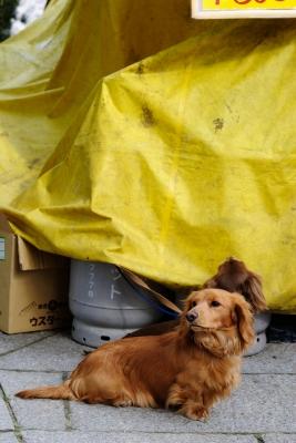 soku_26206.jpg :: 動物 ペット 犬